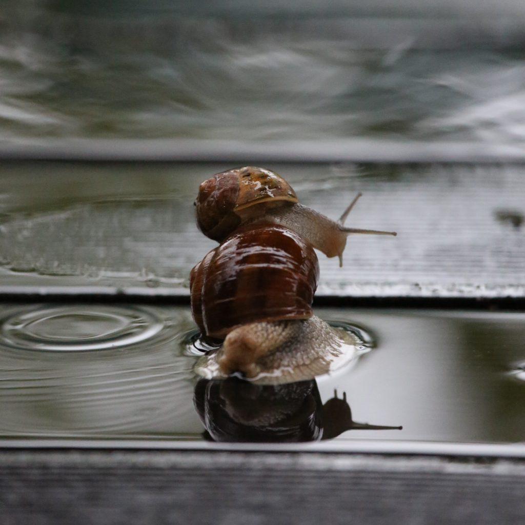 Escargots au Vide Grenier